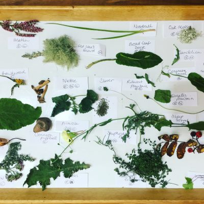 Forage your meal Alladale Wilderness Reserve onsite Activities